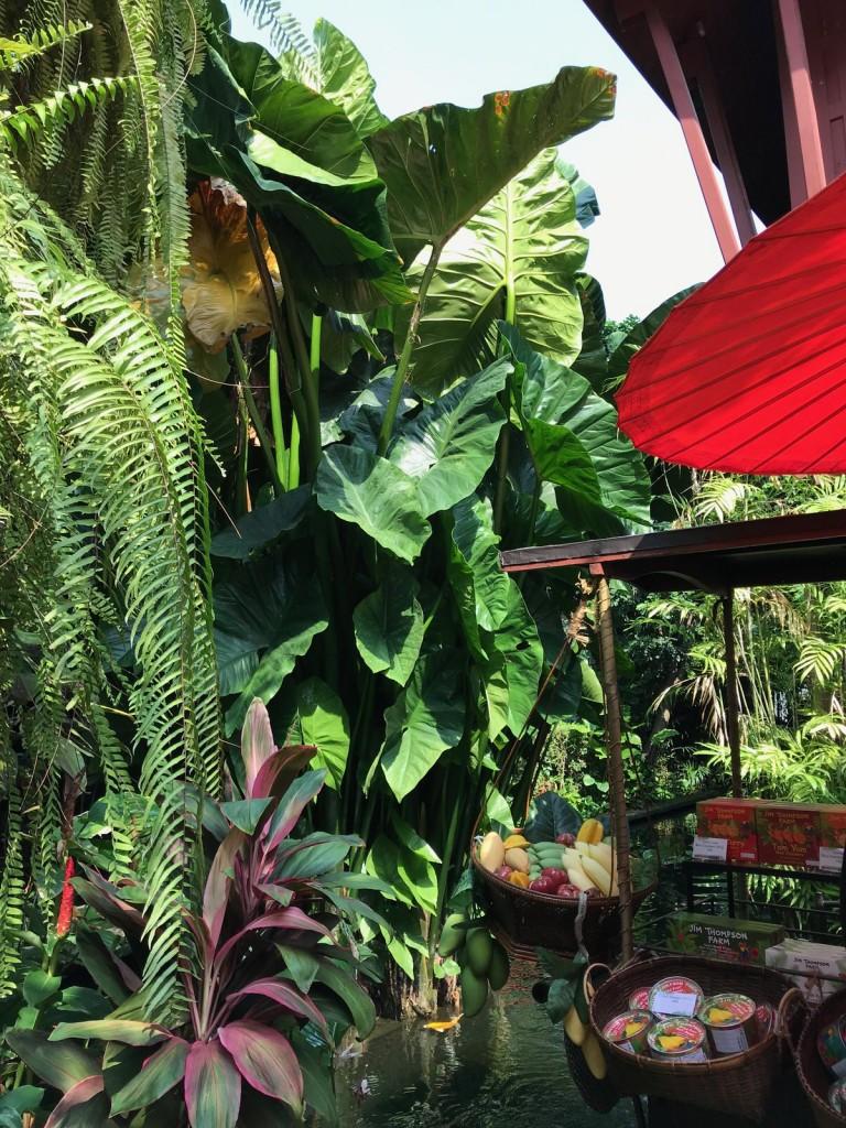 タイシルクを世界に広めたジム トンプソンの家。庭がすごい!クワズイモの葉が1m以上ある!