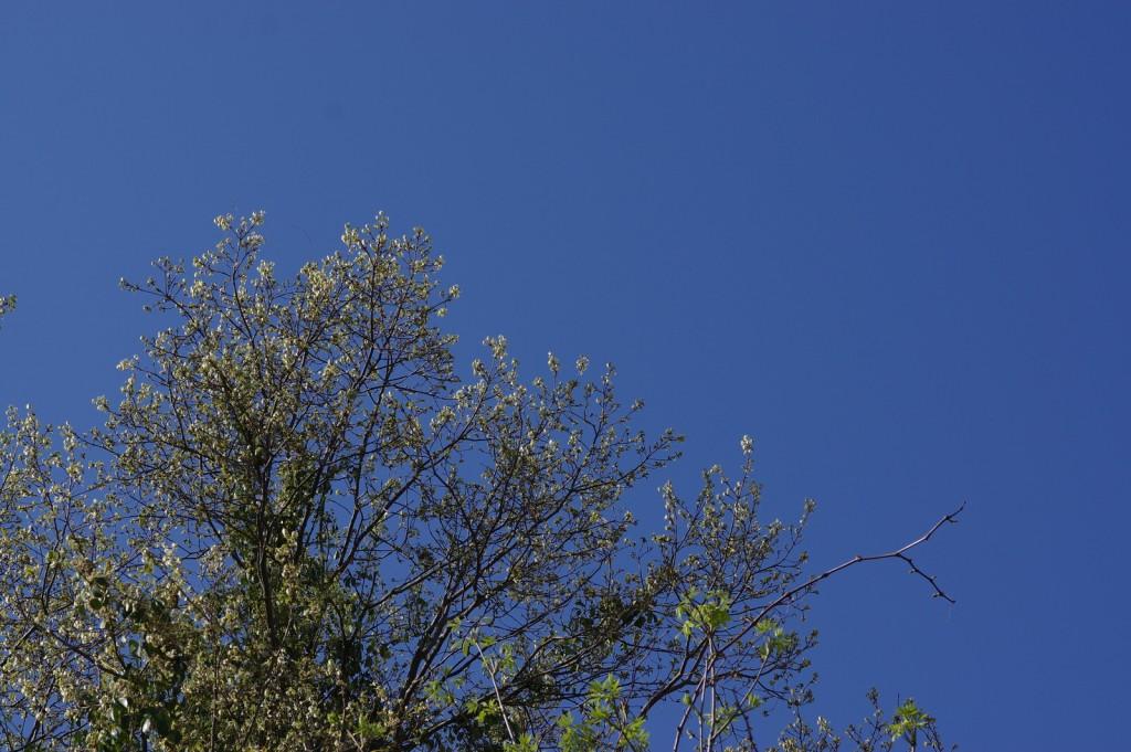 若葉と青い空